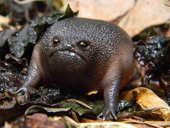 世界上最酷的十种青蛙